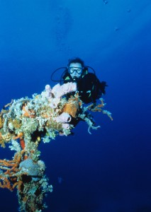 Dive04-coral